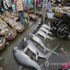상어,멸종,해역,산호초,기능적,결과