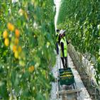 농업,스마트팜,귀농,유통