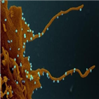 바이러스,감염,구강청결제,신종,코로나19,환자,일본