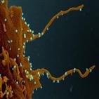 감염,바이러스,신종,코로나19,독일,환자,억제