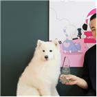 마케팅,전문몰,반려동물,인사이트,브랜드