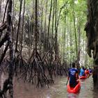 맹그로브숲,복원,베트남,산림청