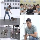 강형욱,바키,토비,보호자