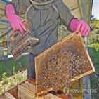 양봉산업,육성,양봉,꿀벌,단위,농식품부
