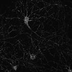 세포,에너지,유전자,생성,수위