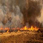 화재,지역,브라질,비상사태