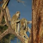 수컷,개코원숭이,암컷,집단,사회적,오래