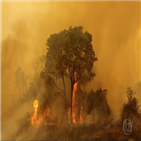 화재,생태계,동물