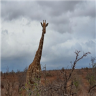 동물,국립공원,사파리,크루거,코뿔소,아프리카,임팔라