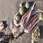 해변,캄차카,주민,러시아,오염,해양생물,당국,조사