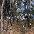 송이버섯,인공재배,발생,국립산림과학원