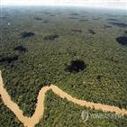 초원,강우량,아마존,열대우림,다우림