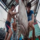베트남,수산물,참치