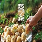 감자,감자빵,파리바게뜨,판매,카페,평창군