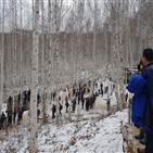 자작나무,인제,분석,결과,국립산림과학원,겨울