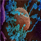 바이러스,인간,세포,감염,실험