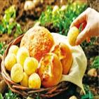 감자빵,감자,파리바게뜨,제품