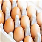 달걀,질환,비타민,심혈관,섭취,사람