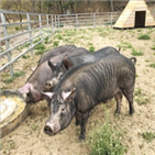 돼지고기,서울