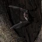박쥐,행동,집단