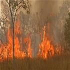 화재,브라질,최악,계속