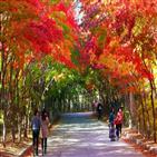 거리두기,고속도로,1단계,서울