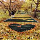 낙엽,구간,거리