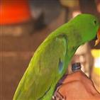 앵무새,주인,화재,호주