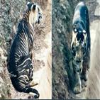 호랑이,인도,세계