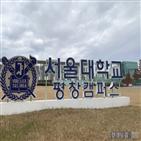 서울대,평창캠퍼스,평창캠,시흥캠퍼스,당시,설립,상황,운영,투입,문제