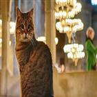 성소피아,글리,이후,고양이,모스크