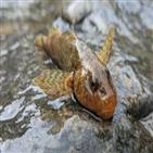 아스프레테,물고기