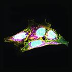 유전자,노화,면역,세포
