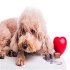 동물약국,예방약,동물병원,심장사상충