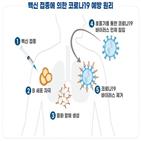 단백질,백신,임상,승인,코로나19