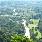 브라질,건설,아마존,도로,열대우림