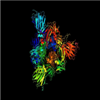 스파이크,진동,단백질,신종,코로나,자물쇠,결과,코로나바이러스