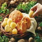 농가,사과,당근,감자,파리바게뜨,그룹