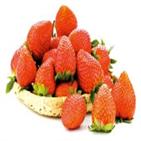 딸기,확보,가격,편의점,전년