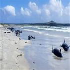 들쇠고래,해변,환경보호부