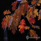 흡수,낙엽,광합성,낙엽수,연구팀,온대