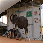 코끼리,캄보디아,파키스탄,보호구,동물원