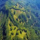 벌채,산림,나무,목재,친환경,한국,산림청,방법,미국,증가율
