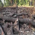 열대우림,아마존,파괴,브라질