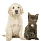 보험,고양이,마리,보험금,지급,강아지
