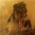 화재,정부,브라질,인간