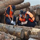 중국,호주,원목