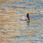 양쯔강,중국,보호법,금지