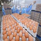 계란,농바이오,배송,시스템,달걀,물류