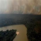 화재,브라질,지난해,삼림